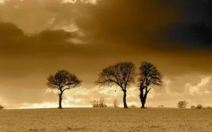 three_trees